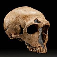 Neanderthal discovery