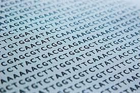 Neanderthal genome sequenced