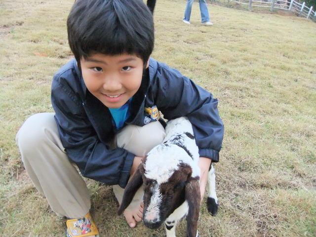 First Time I Fed A Sheep