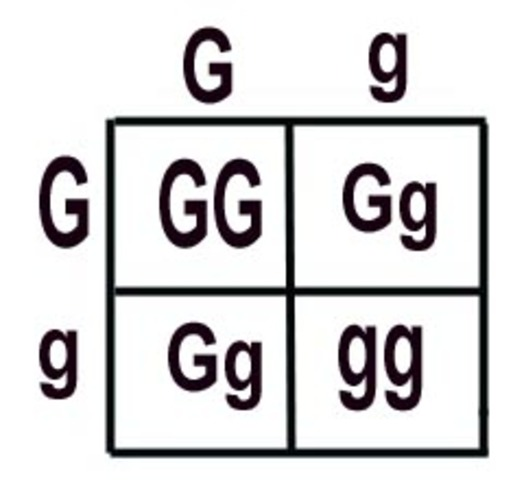 Gregor Mendel's Law of Inheritance