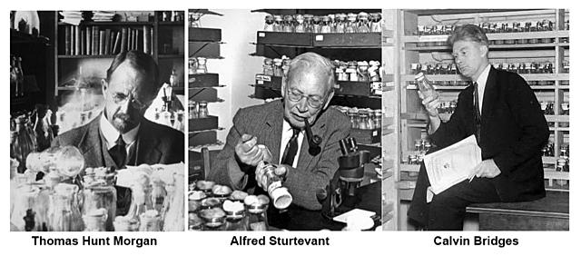 Thomas Hunt Morgan et Alfred Strutevant