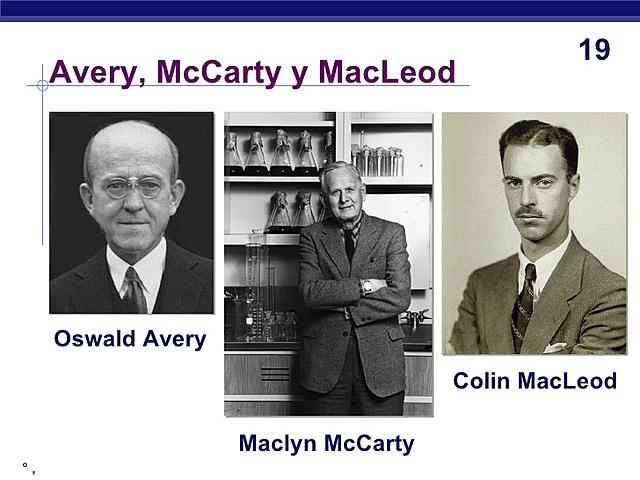 Avery, MacLeod et Mc Carty