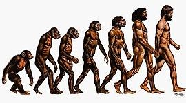 Evolución de los hominidos timeline