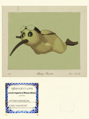 Apteryx Permedae