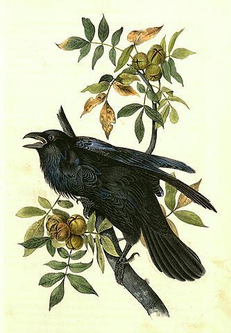 The Raven: Edgar Allen Poe