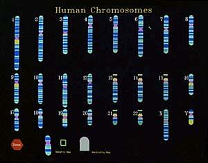 Premières cartes du génome humain