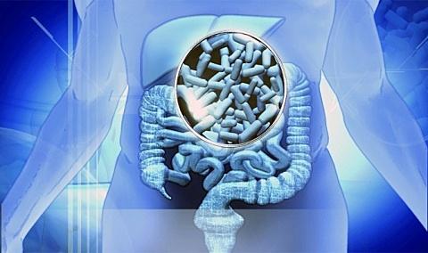 Le rôle du microbiote intestinal