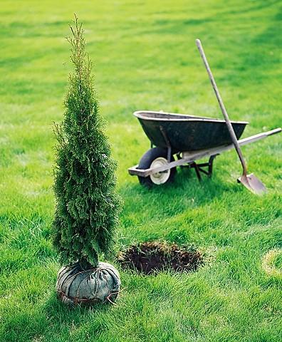 Hier, j'ai planté un arbre.