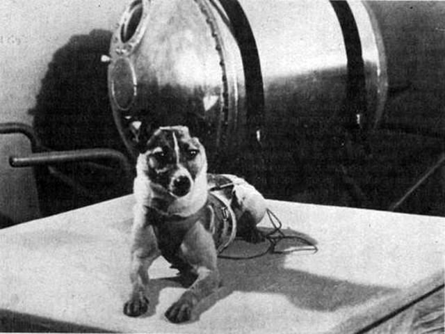 Soviet dog, Laika goes to space