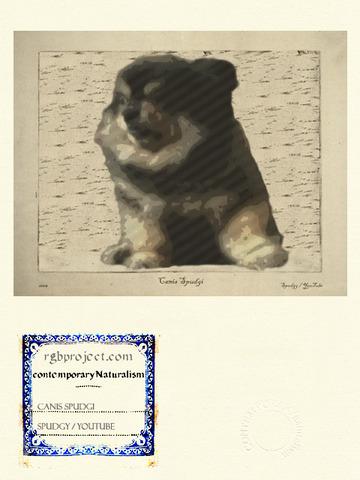 Canis Spudgi