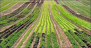 Diversidad de los cultivos puede desaparece al 75%