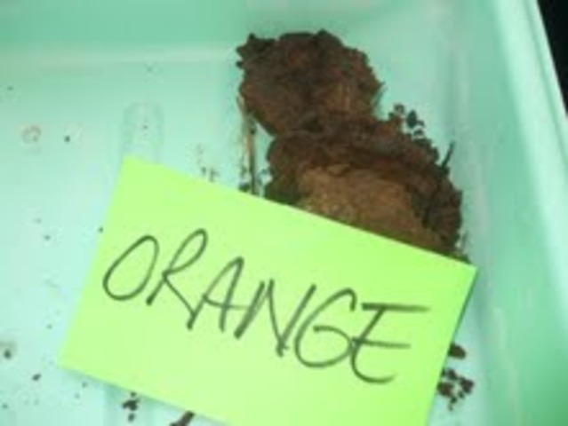 Orange conclusion
