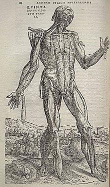 Anatomia: s'anoten, es descriuen i es realitzen les primeres disseccions del cos humà - Andreas Vesalius