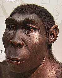 CUARTA EVOLUCION HOMO ERECTUS