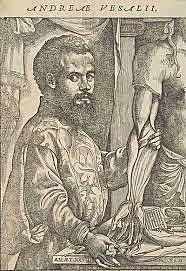 Vesalius i la anatomia del cos humà
