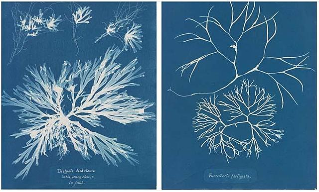 Anna Atkins Creates the First Photography Book