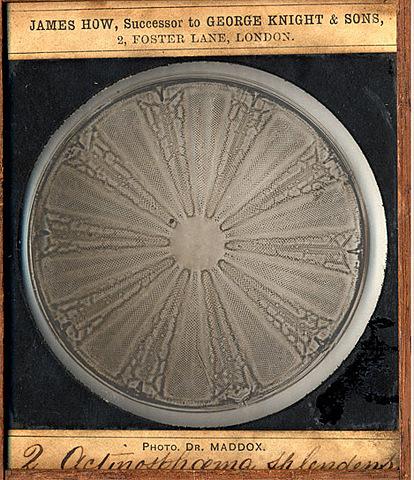 Silver Gelatin Process (Dry Plate Process)