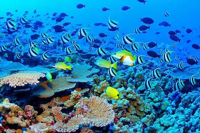 Metas Objetivo 14: Vida submarina