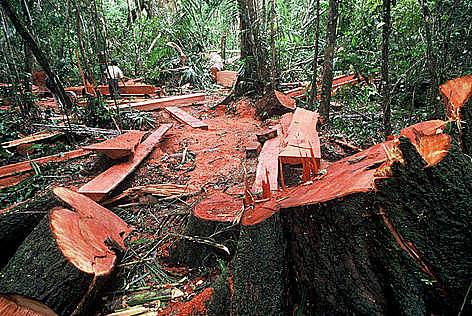 Datos destacables al Objetivo 15.-Bosques