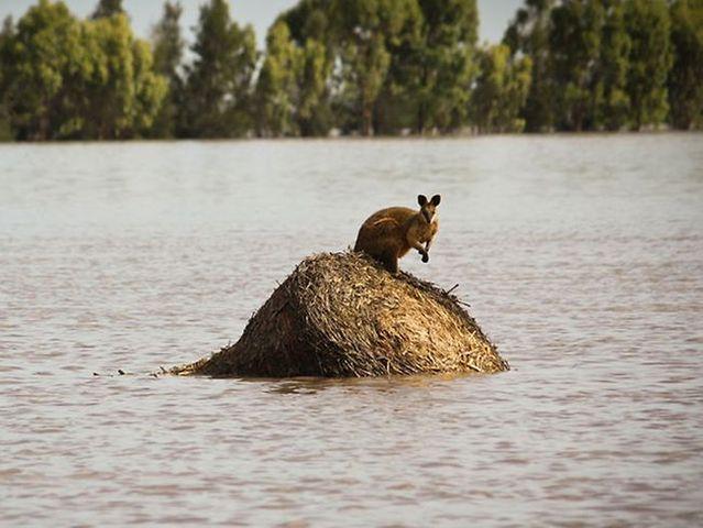 Flood in Qeensland