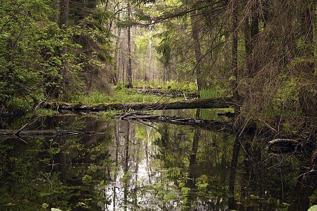 Metas Objetivo 15: Vida de ecosistemas terrestres.Parte 2