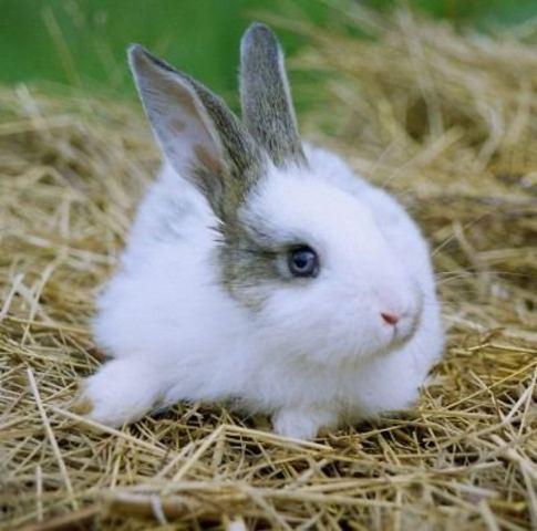 Rabbit died