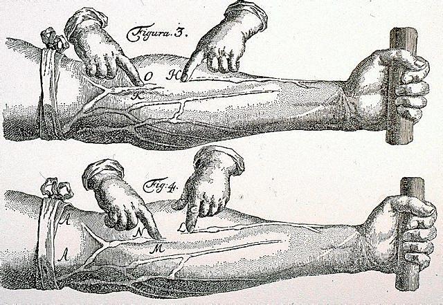 Circulació sanguínia