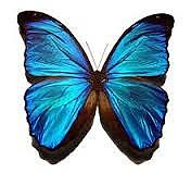 Η μεταμόρφωση σε πεταλούδα