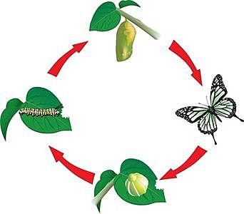 ...και ο κύκλος ζωής της πεταλούδας συνεχίζεται!!!