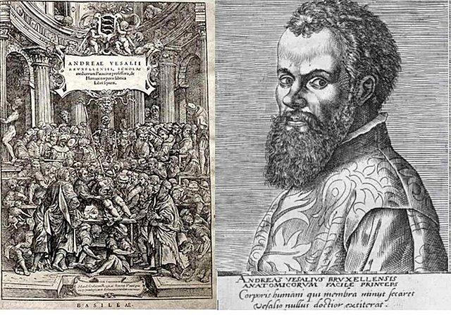 Vesalius descriu l'anatomia, anota i realitza les primeres disseccions del cos humà.