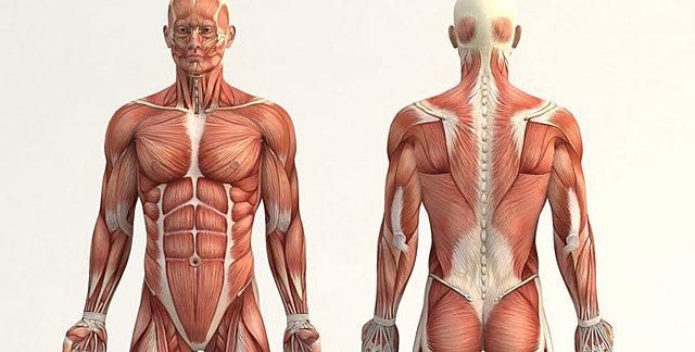 Descriu l'anatomia, anota i realitza les primeres disseccions del cos humà.