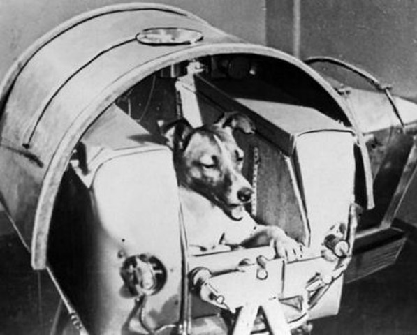 """The first """"Earthling"""", a Soviet dog named Laika, is successfully sent into space."""