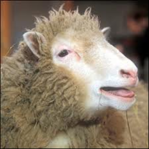 Ian wilmut, Keith campbell, and other of their colleauges made the first cloned sheep
