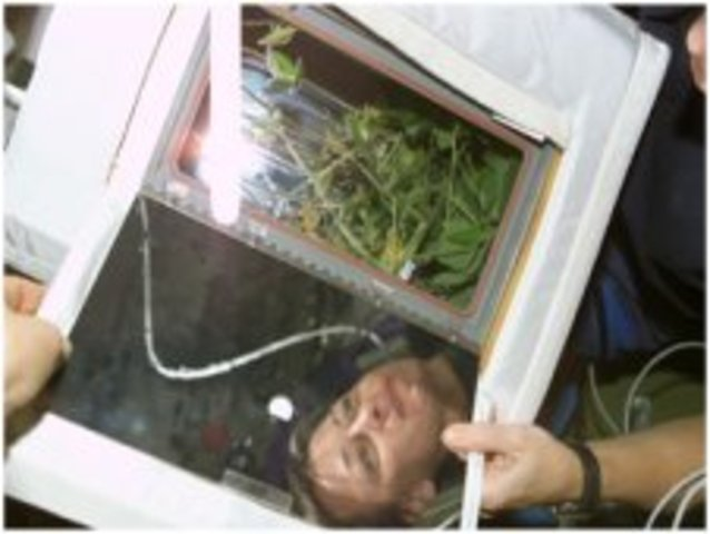 """Antigravity Effects on Plants Reseearch """"astroculture"""""""