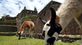 Peru's History timeline