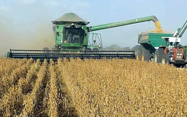 El Gobierno prevé autorizar 4 variedades por cada semilla transgénica