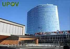 Constitución de La Unión Internacional para la Protección de las Obtenciones Vegetales (UPOV)