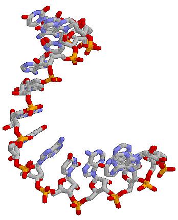 Thomas Cech - Sidney Altman: Mundo de ARN