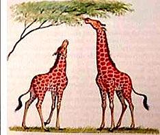 Jean Baptiste Lamarck : primera teoría evolución biológica