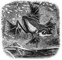 Alfred Wallace: teoría de la evolución