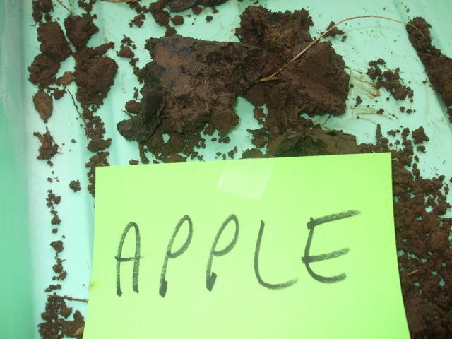 Apple Conclusion