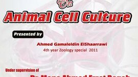 animal cell culture timeline