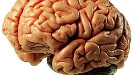חקר המוח timeline