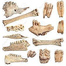 Indicis Matemàtics (35.000-20.000 aC)
