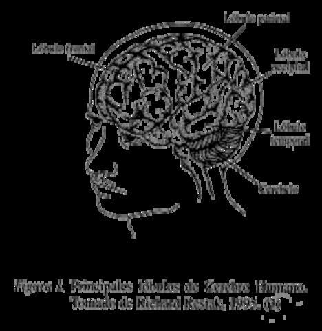 PIAGET: El lenguaje y el pensamiento en el niño
