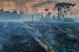 The Amazon Burns