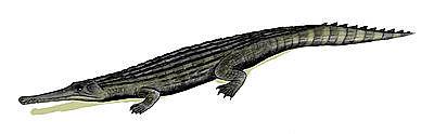 Cerrejonisuchus improcerus
