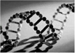 ДНК-вычисления