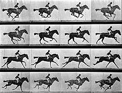 Serie de Fotografías al galope de una yegua.