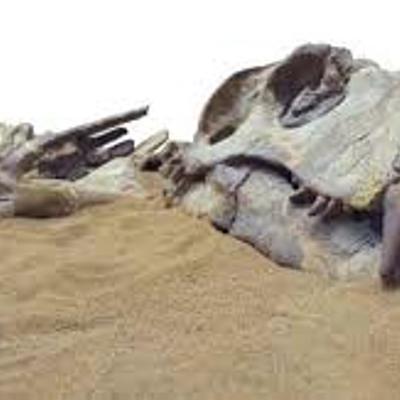 Animales extintos a través de la historia Alejandro Quintero 8A timeline